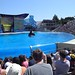 Sea World with SYR - 035