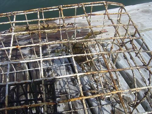 Ocracoke 2011-007