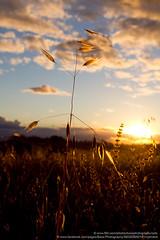 Parkes, NSW, Australia (Bass Photography) Tags: sunset field grass farm australia nsw newsouthwales parkes centralwestregion