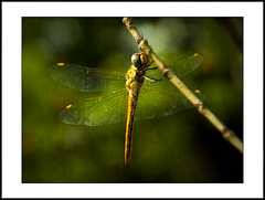 close-up #7 (e.nhan) Tags: life light black green art nature yellow closeup colorful colours shadows dof dragonfly bokeh backlighting enhan