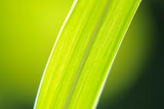 green :-)