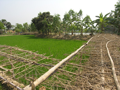 An aquatic agricultural system, Bangladesh. Photo by Peter Fredenburg, 2009