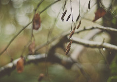 embrace it (Suzi Marshall) Tags: wood autumn tree leaves 50mm bare aftertherain coastpath sloo hencethemoodyphoto changedtheclocksyesterday itseemedlikeadarkday