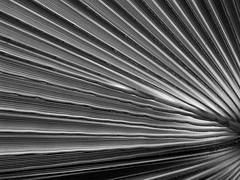 palm rays (dmixo6) Tags: spain andalucia dugg dmixo6