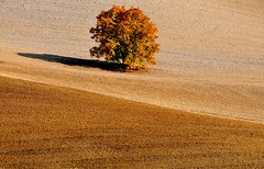 Autunno nelle Crete (Capitan Mirino ( il Tartarughino )) Tags: autumn italy tree ground siena toscana terra albero autunno cretesenesi sangiovannidasso