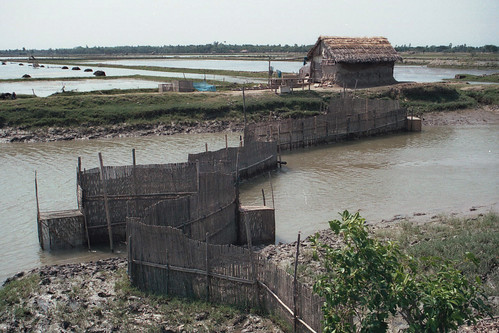 Fish fence, Bangladesh. Photo by Malcolm Beveridge, 2006