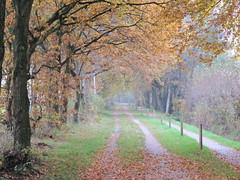 Autumn lane (louisamaria) Tags: road autumn trees fall netherlands colors bomen herfst nederland lane groningen weg laan haren kleuren zandpad ruigelaan oosterhaar