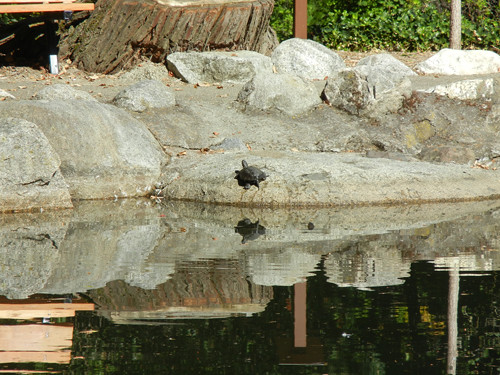 Lithia Park, Ashland, Oregon _ 6252
