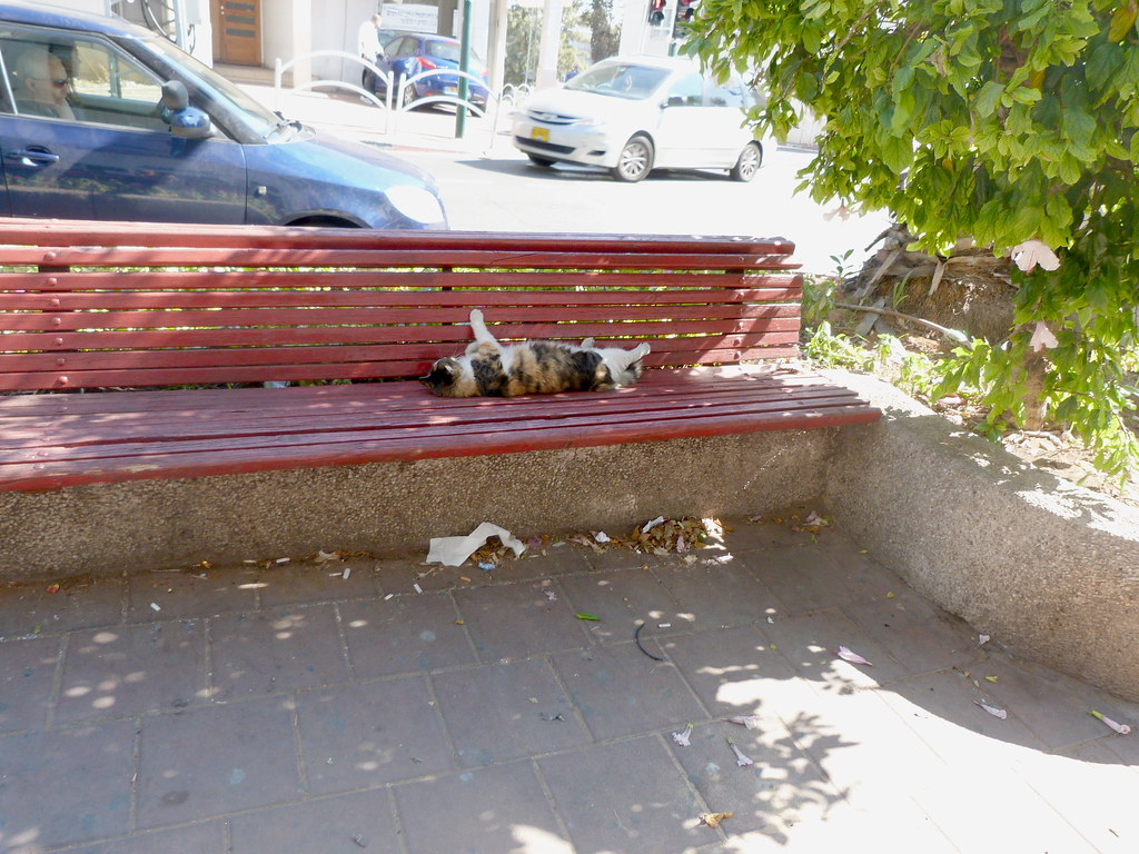 03-11-2011-lazy-cat-in-the-middle-of-town