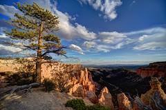 Looking North From Bryce Canyon, Utah (Brian Callahan (Luxgnos.com)) Tags: photography utah brycecanyon briancallahan shinsanbc luxgnosis luxgnos luxgnosiscom beautifulafternon