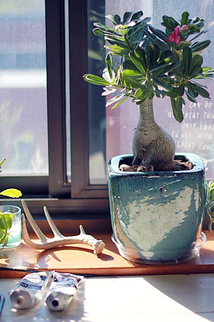 plantler