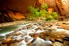 Virgin River and Dogwoods, Zion Narrows (Robert Pearce Photography) Tags: trees red green water leaves river landscape utah nationalpark nikon sandstone rocks sigma cliffs zion zionnationalpark narrows dogwoods virginriver flowingwater giottos nikond200 sprindale singhray robertpearce robertpearcephotography indurophq3