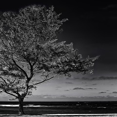 """from the library of the sea"" (helmet13) Tags: d90 raw bw landscape mauritius tree sea wind soundofthesea sky aoi 100faves world100f gettyimages simplicity"
