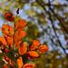 autumn-forest3