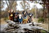 IMG_2708 (Bettina Woolbright) Tags: portrait outdoor dachshund weiner doxie weinerdog dogportrait 35l 24l 5d2 bettinawoolbright