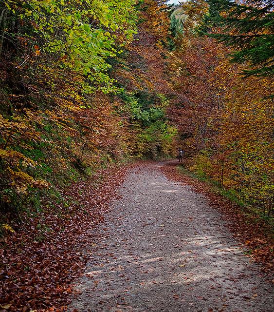 Selva de Irati (Navarra). Nov. 2011