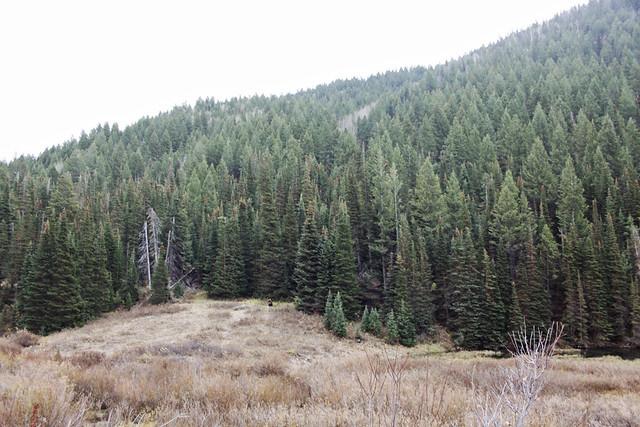 Salt Lake City canyon moose 2