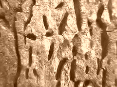 LAPUK. ('NADI') Tags: out worn rotten decayed mouldy lapuk