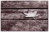 Fallen (dibytes) Tags: november autumn leaf collingwood mapleleaf boardwalk nik splittoning harbourviewpark colorefexpro2 3652011