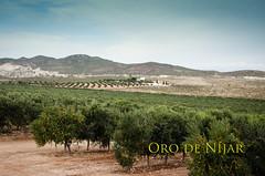 Parque Natural Cabo de Gata-Nijar (Grupo Caparrs) Tags: espaa sol de cabo natural oil grupo oliva almeria parte oro aceituna prez fernn portocarrero caparros njar gatanijar