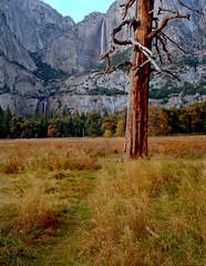 Yosemite Dusk (Sequoia!) Tags: kodak bronica 220 bronicaetrs645portra400californiamediumformatfilmanaloglandscaperiversanjoaquinriver