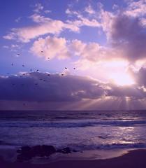 Chocolate Chip Sunrise (PelicanPete) Tags: ocean seagulls nature beauty sunrise unitedstates natural florida boulders atlanticocean eastcoast southflorida deerfieldbeachfl