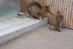 Play #2 (tamon,inc.) Tags: cat mix kyoto play brother pontocho