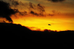 Cormorant at Sunset (Daniel Kingscott-Edmunds) Tags: sunset cormorant