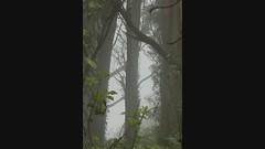 The Phantom returns to Mount Davidson (LOLO Italiana) Tags: sanfrancisco ca blackandwhite selfportrait halloween nature scary spooky slideshow phantom stopmotion mountdavidson whitemask scaryfigure selftimingsetting imovieprogram