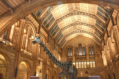 Main hall and Dinosaur