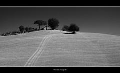 Toscana ( WimKok) Tags: trees sky blackandwhite bw italy canon landscape iso100 bomen italia zwartwit hill tuscany nik siena lucht toscana toscane f8 italie landschap lightroom lecrete heuvel 70mm 1400 heuvelland eos50d artistoftheyearlevel3 artistoftheyearlevel4 musictomyeyeslevel1