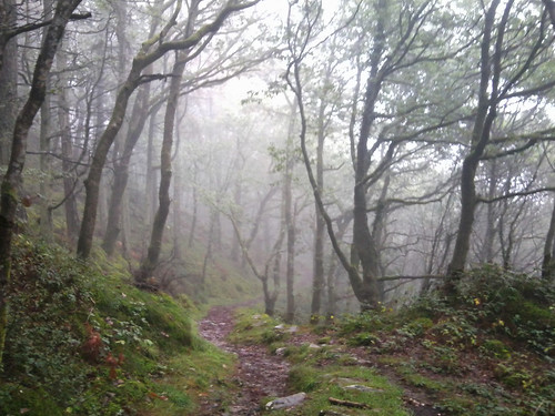 Misty woods, Panorama Walk