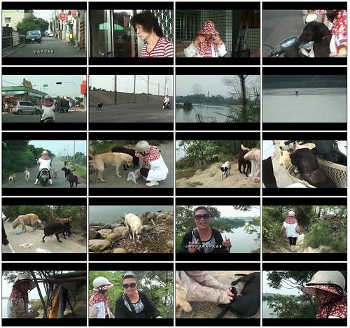 「推」討海的狗,20111012