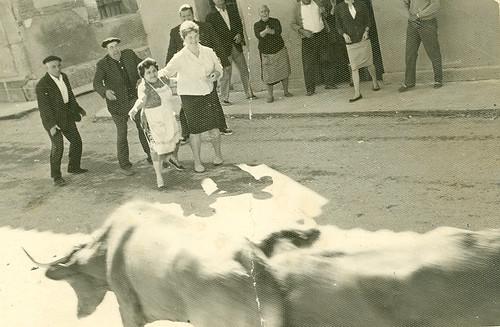 Vacas en al calle San Juan