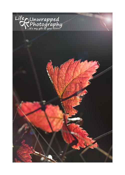 Oct1411_0041ew