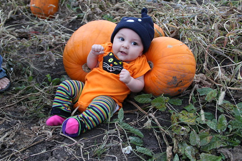 Jovie with her cat onesie and pumpkins!