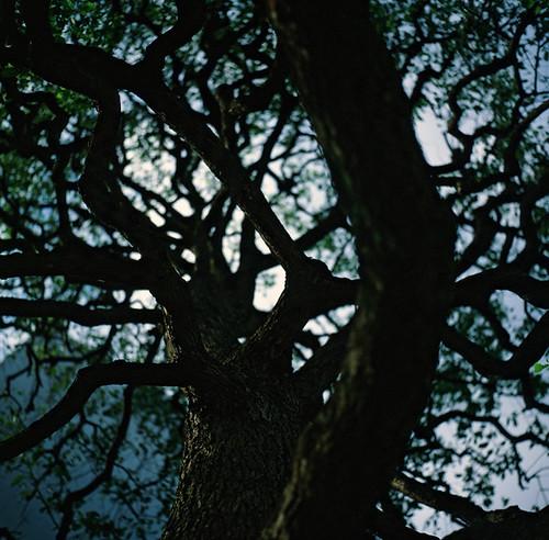 自由之丘 - 榕樹下