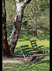 Waiting With Hope (ralphb58.) Tags: park new wales bench hope waiting thankyou south australia nsw bone parkbench bronson wellwishes