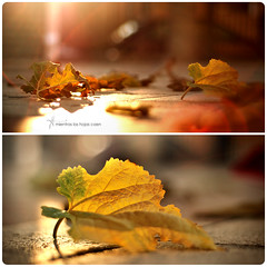 Mientras las hojas caen (J. Tiogran) Tags: autumn blur leaves backlight contraluz hojas nikon bokeh desenfoque otoo nikkor julin solana serrano villajoyosa secas lavilajoiosa lavila 50mmf18afd d5000 julinsolana