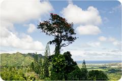 on the way to kailua (mohini :: mangopowergirl.com) Tags: blue autumn trees sky green fall clouds hawaii oahu lookout lush overlook pali kailua 2011 nuuanupali