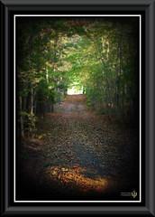 Pathway (Doug Logan Photography) Tags: autumn fall leaves path peaceful pathway douglogan dougloganphotography