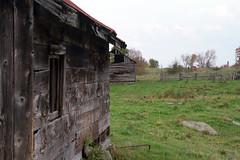 IMG_6751 (midnightsYYZ) Tags: autumn abandoned field rural farm country homestead sebright fallcolours kawarthalakes