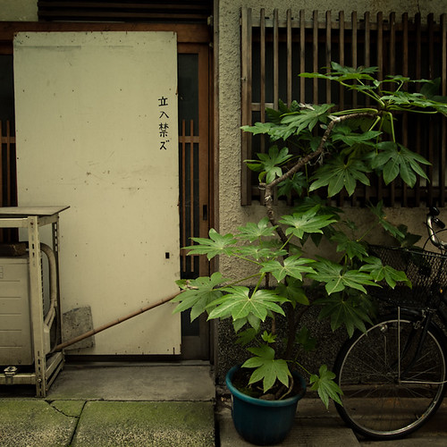 Leaning Potted Plant, No Entry