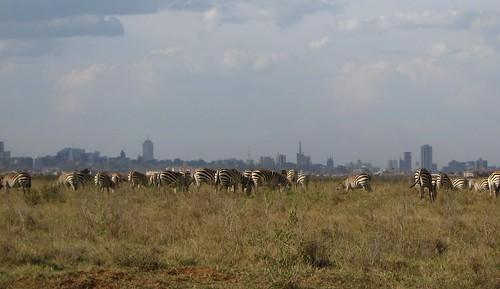 zebra safari kenya africa nairobi