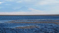 Laguna Tebinquiche, San Pedro de Atacama (vivoandando) Tags: chile atacama laguna sanpedrodeatacama tebinquiche
