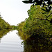 Mangroves-11