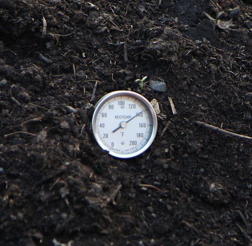 Taking the Compost's Temperature