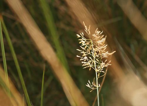 Grass by Helen in Wales