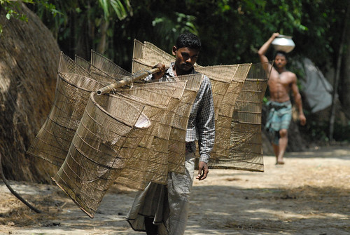 Carrying bamboo fishing equipment, Bangladesh. Photo by WorldFish, 2006