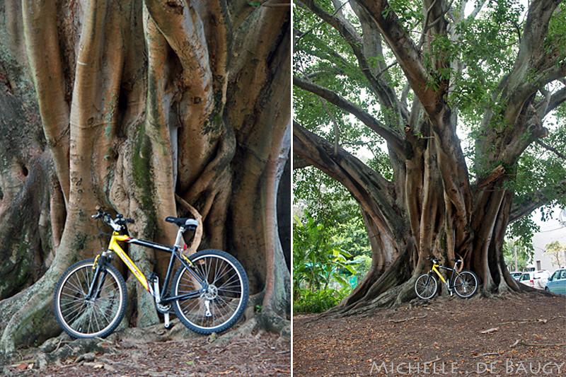 bikeride6_edited-1